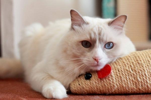 Výbavička pro kotě