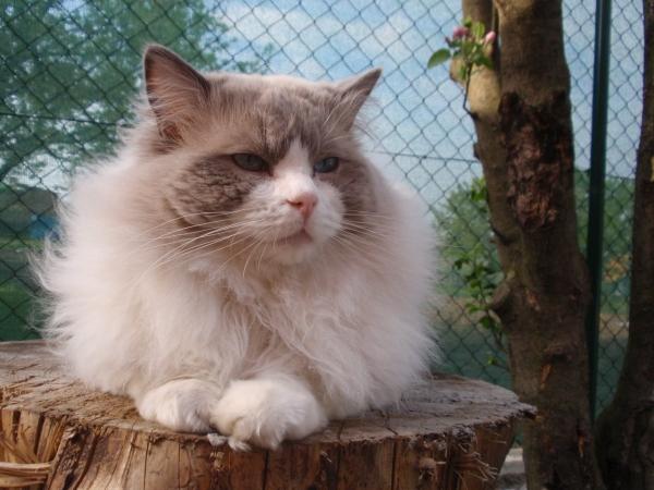 Péče o kočičího seniora
